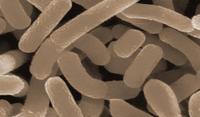 Aneh dan Ajaib, Mikroba Bisa Bantu Bersihkan Kebocoran Gas Alam
