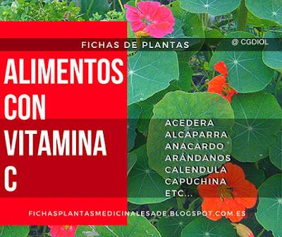 Plantas con presencia de Antioxidantes por su contenido de vitamina C