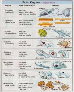 Materi Protista