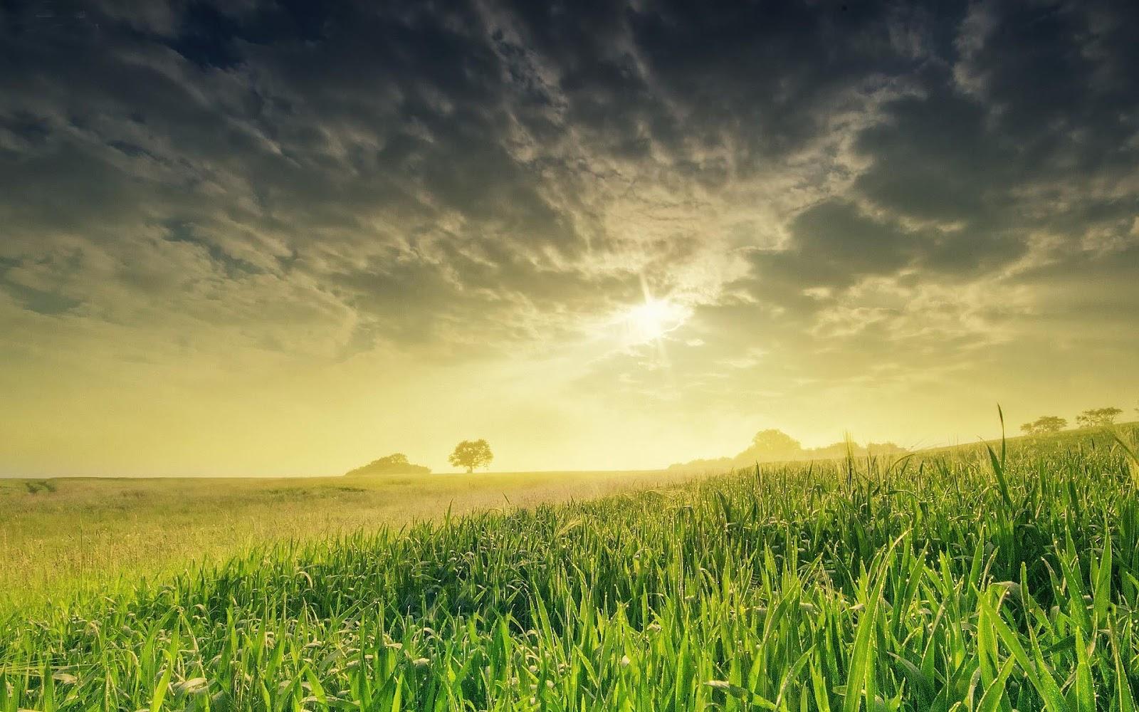 Gras Achtergronden | HD Wallpapers