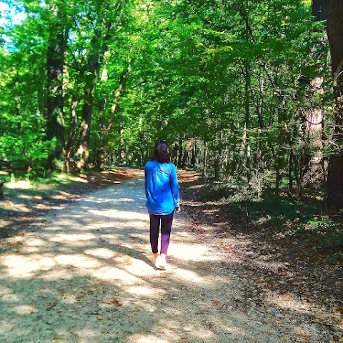 Into The Forest We Go To Find Ourselves
