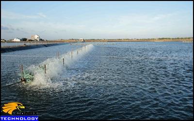 Công ty tư vấn đầu tư công trình xử lý nước thải thủy sản - Đầu tư trong  nuôi thủy sản