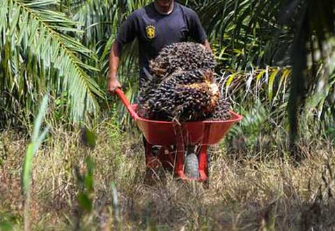 el-nino impact of palm oil prices