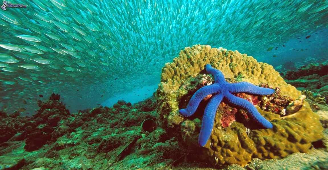 Equinodermos y estrella de mar