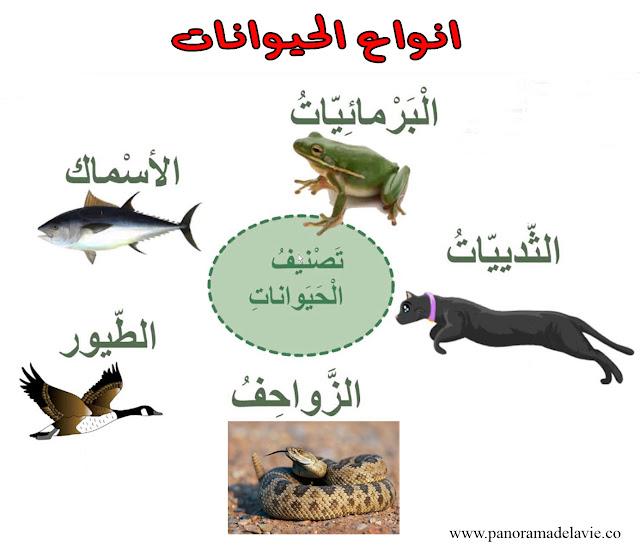 أصناف الحيوانات ، أنواع الحيوانات