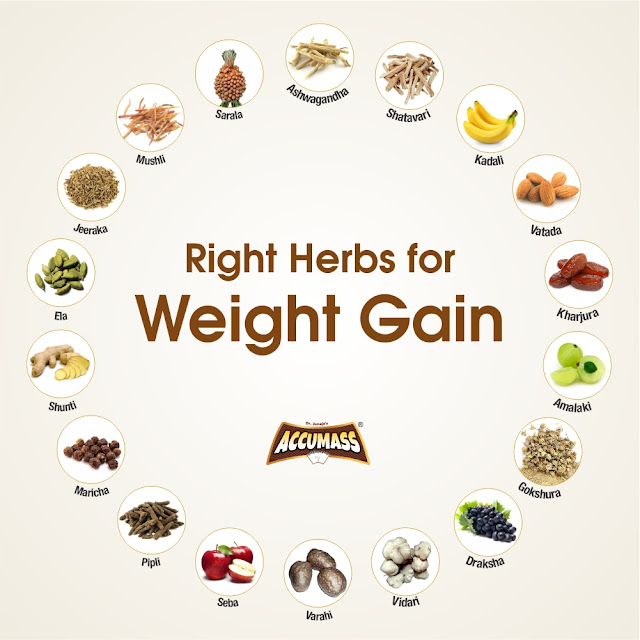 Gaining Weight with its Natural Herbs - Accumass