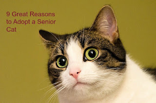 "A brown and white cat. The image says, ""9 Great Reasons to Adopt a Senior Cat."""