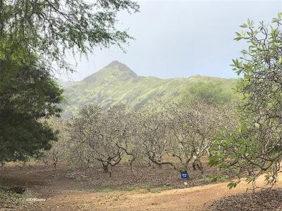 Koko Crater Botanic Garden, Oahu