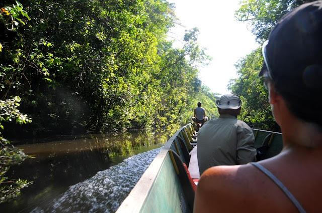 Amazonewoud Frans-Guyana, tropisch regenwoud,