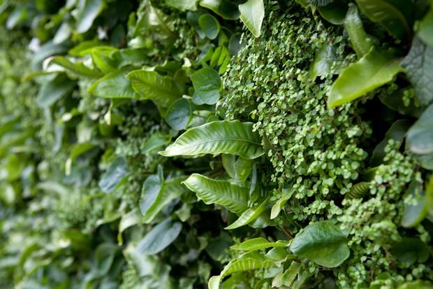 दीवारों पर सब्जियां उगाकर हर महीने लाखों रुपए कमा रहे लोग... - newsonfloor.com