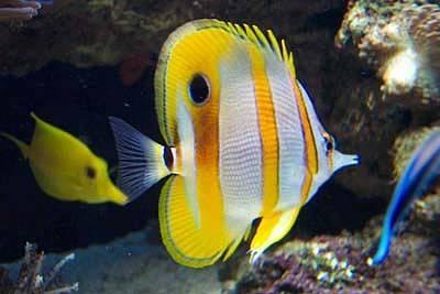 il guardiano del faro fotografico pesci tropicali 1