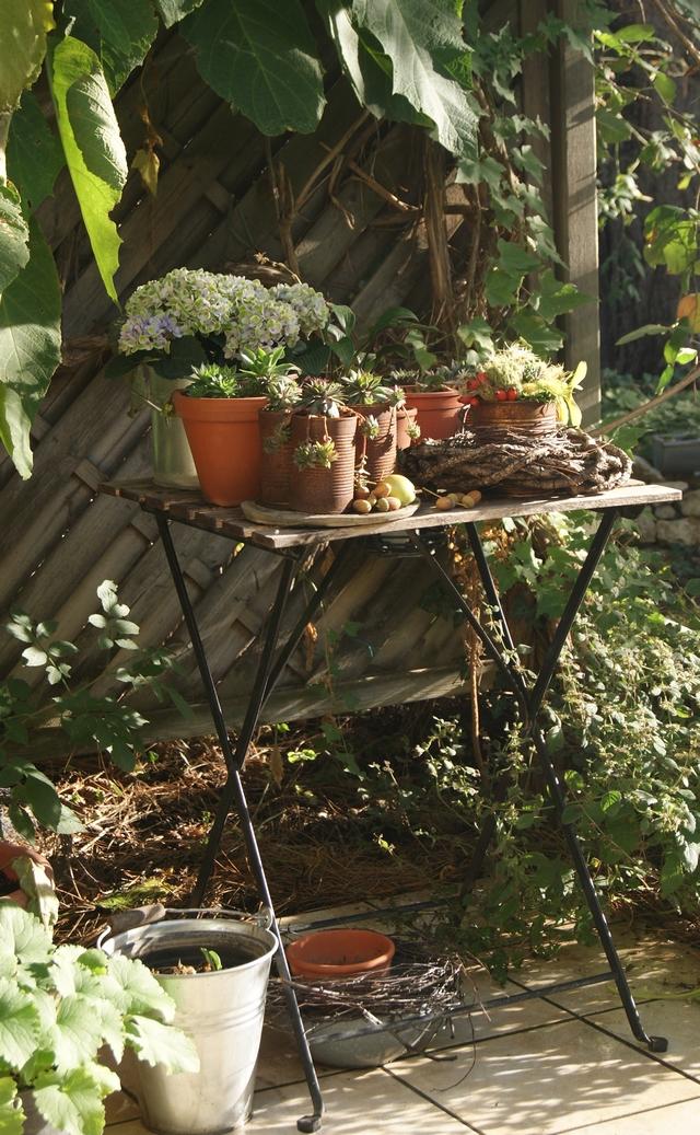 Gartentischdekoration mit Hortensie, Semperviven und herbstlichen Früchten