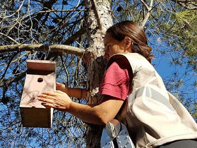 Colocación de caja nido