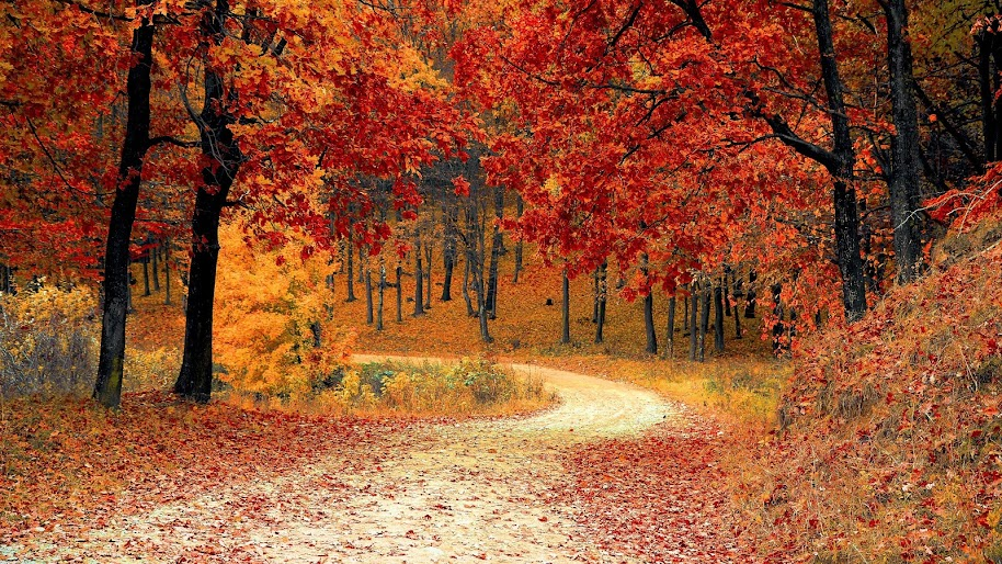 Autumn Trees Forest 4k 3840x2160 Wallpaper 22