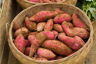 Sweat Potatoes were Padded Registered Superfood, this reason