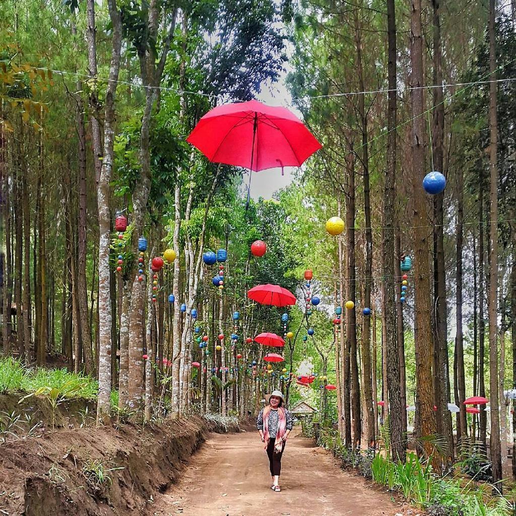 Wisata Alam Hutan Pinus di Sumber Putih Wajak - KanalMalang.net
