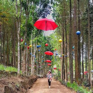 Wisata Alam Hutan Pinus semeru atau bisa disebut Sumber Putih terletak di Wajak Malang Jawa timur