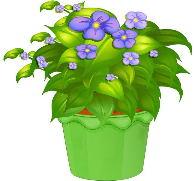 Мое любимое комнатное растение доклад 9371