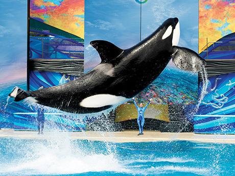 OCEAN DISCOVERY - SeaWorld Orlando