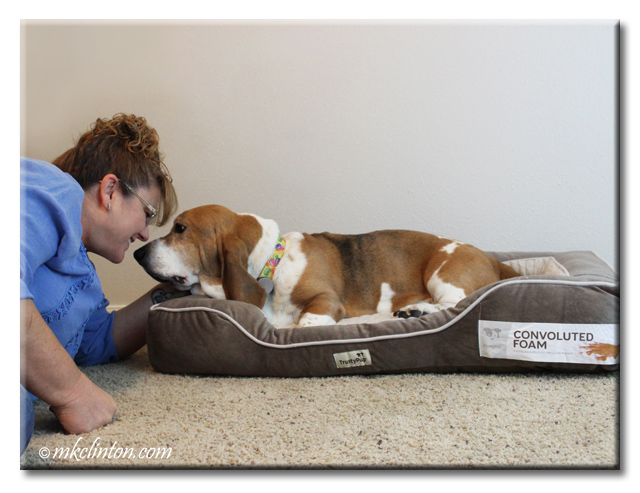 Bentley Basset Hound and I kissing on his Trusty Pup bed