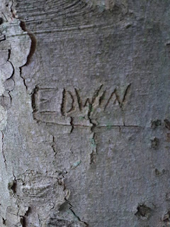Carved tree - photographed during Community Archaeology at St Edwin's Chapel in Sherwood Forest