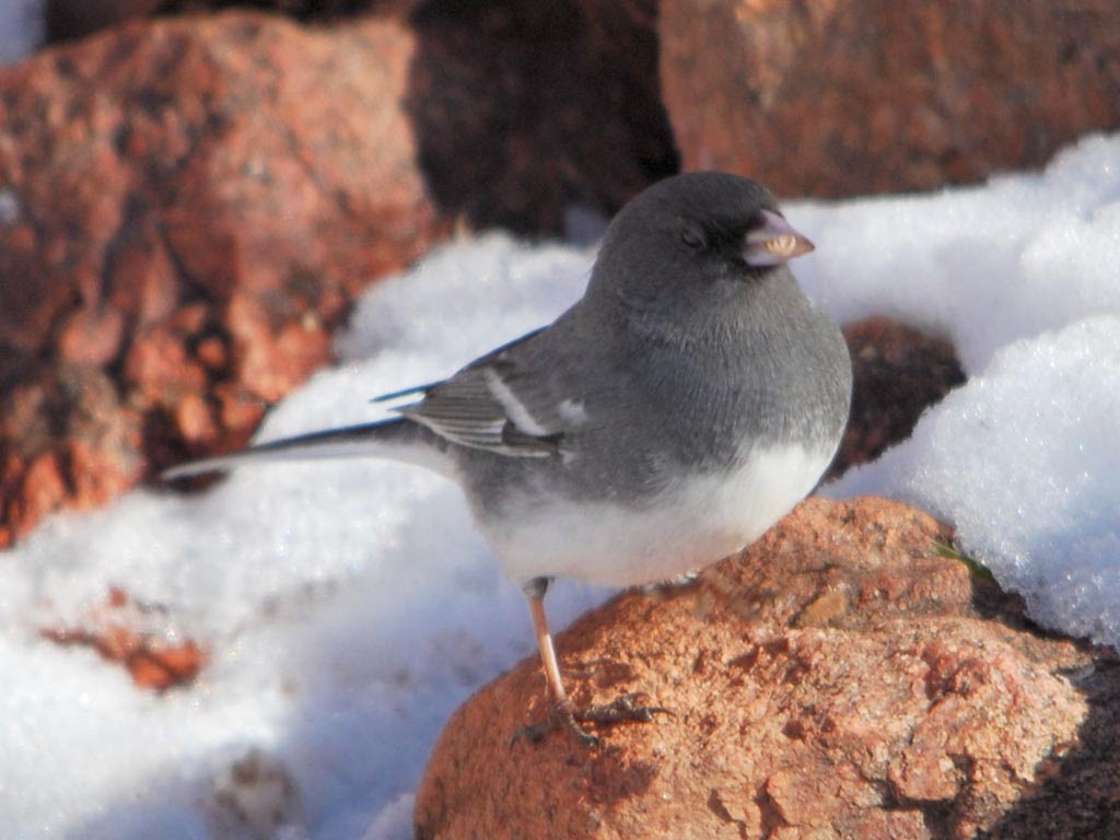 Cute Birthday Cake Wallpapers Junco Birds Rare Images