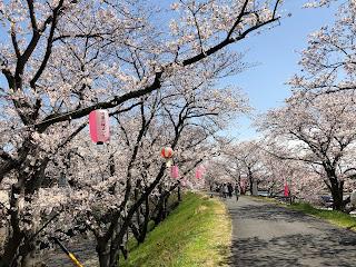 家庭用エアコン1台で快適に暮らせる家 みのや白木です。 桜