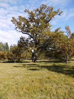 Eichelgarten Forstenrieder Park