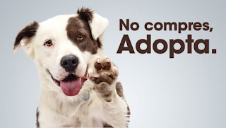 No compres animales ¡ Adopta !
