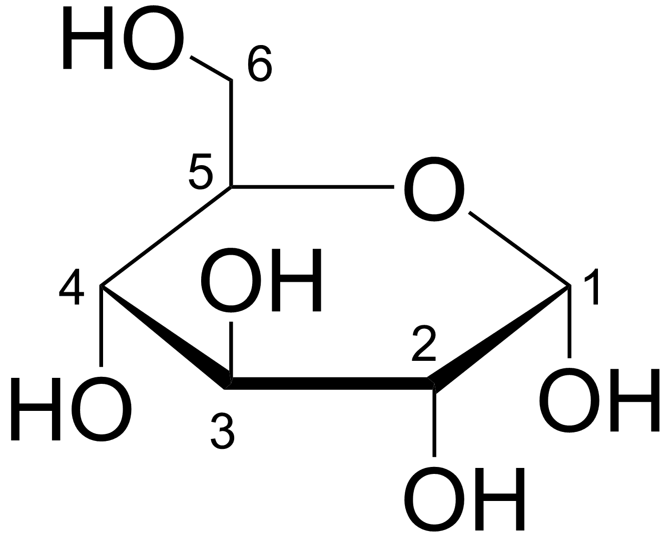 Photosynthesis What Happens To Glucose After It Is Made