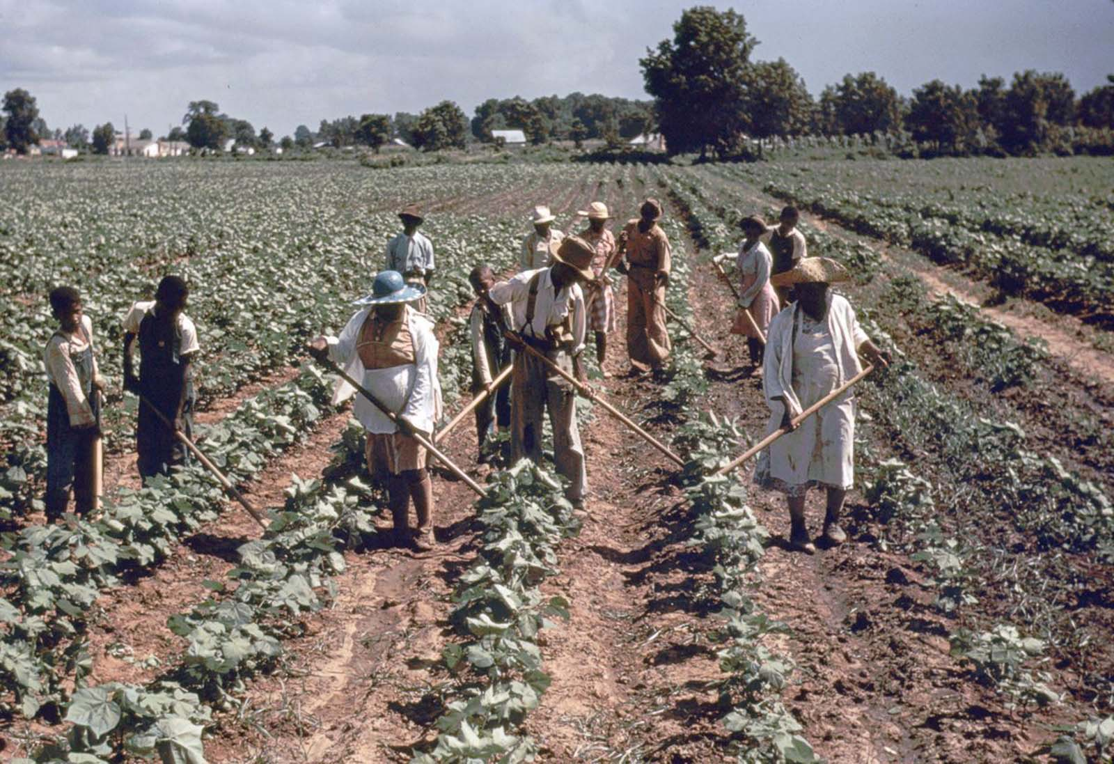 Workers tend crops at Bayou Bourbeau plantation, a Farm Security Administration cooperative in Louisiana. 1940.