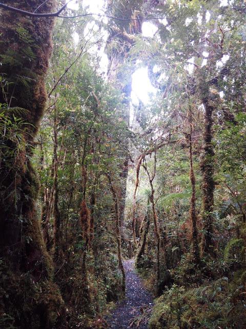 Sendero Alerces, Parque Pumalín, Chile