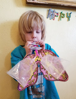 inflatable lungs for homeschooled biology, via refabulous
