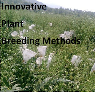 Essentials and Innovative Plant Breeding Methods Dr. Mushtaq Ahmad, Ph.D, NET (Genetics and Plant Breeding) State Agriculture Service Pulwama-192301