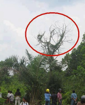 Allah Name On Tree Download Photos
