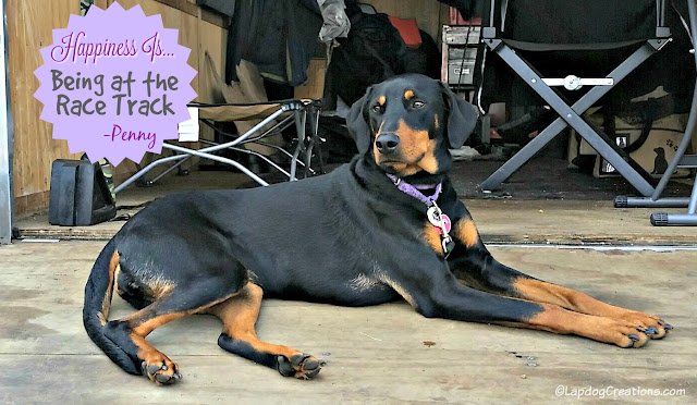 doberman mix rescue dog race track
