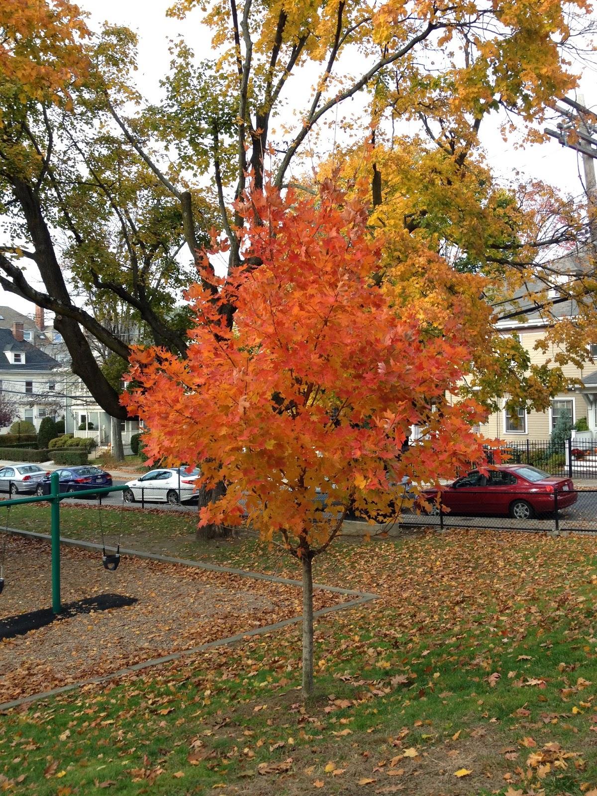Best New England Fall Foliage