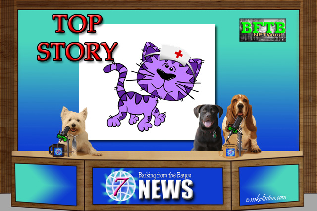 BFTB NETWoof Dog News with nurse cat on back screen