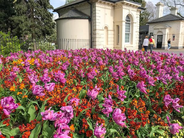 Springtime in England - flowers, flowers, flowers