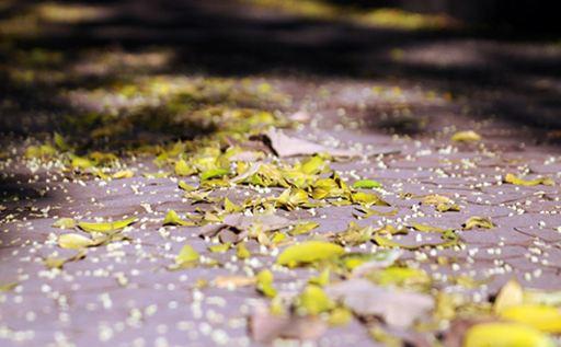 Hiệu ứng hoa mai rơi cho blogspot nhân dịp tết đến xuân về