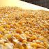 Deputado defende importação de milho e linhas de crédito para suinocultores