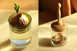 баночка, проращиватель лука