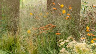 Un jardín con plantación 'espumosa' ganador en RHS Tatton Park