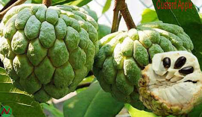Custard apple fruit,Custard apple,