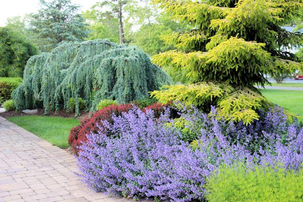 A GUIDE TO NORTHEASTERN GARDENING: Garden Bloggers' Bloom ...