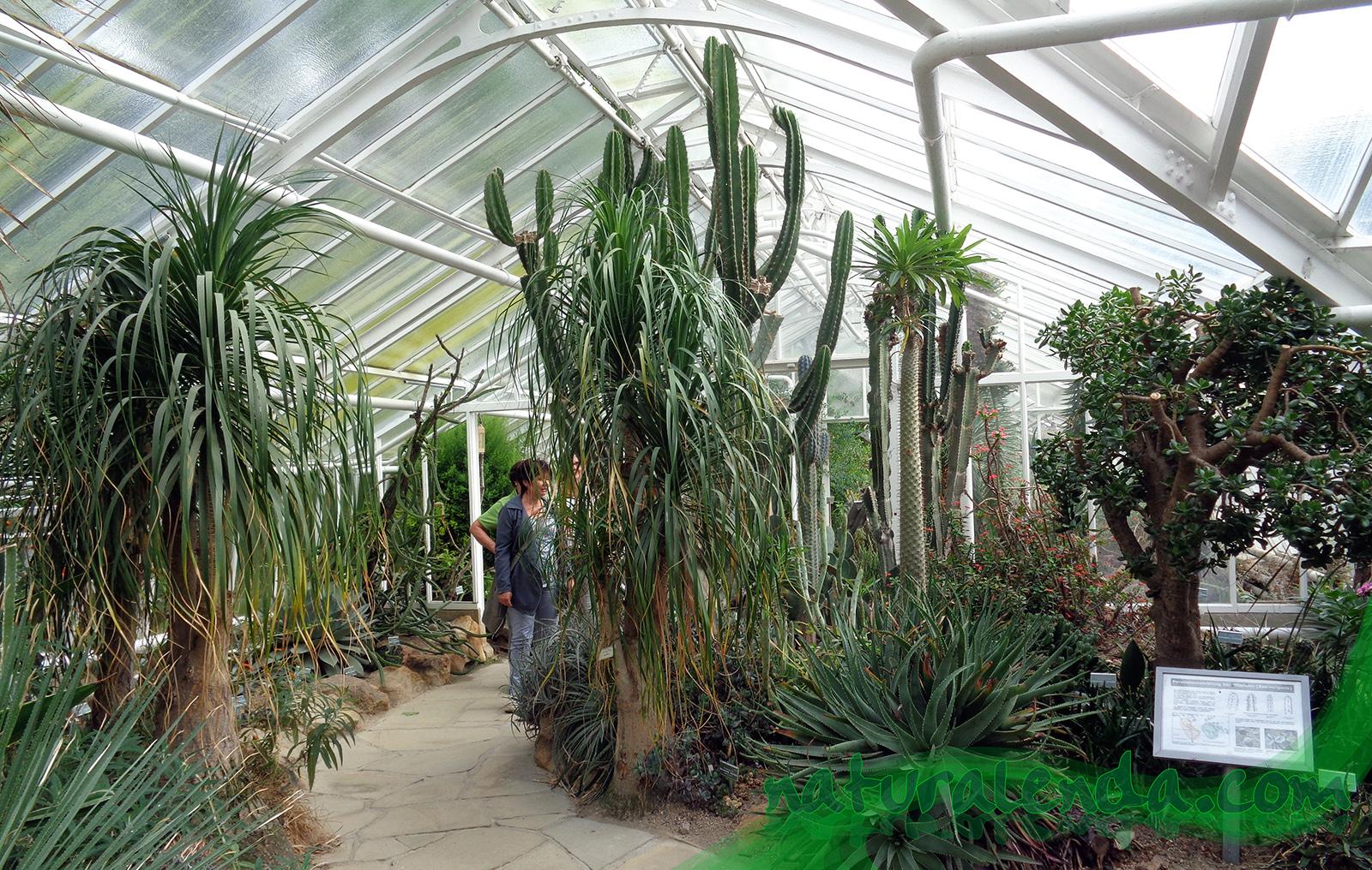 vista de los cactus haciendo de cierre