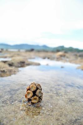 Berburu Sunset di Pantai Pulau Merah-Banyuwangi