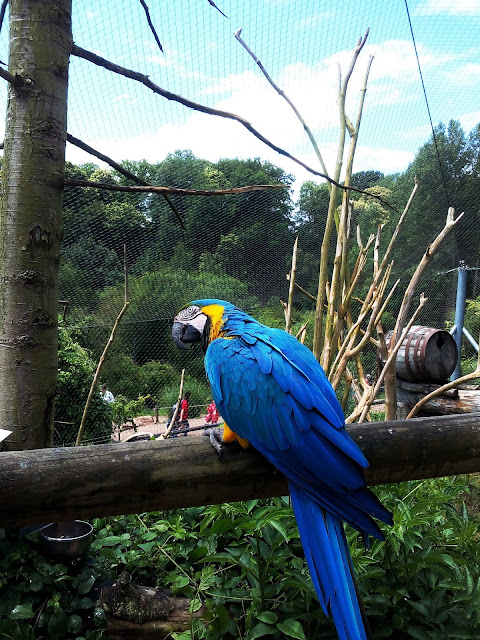 parc zoologique Cerza Hermival-les-Vaux zoo Calvados Normandie