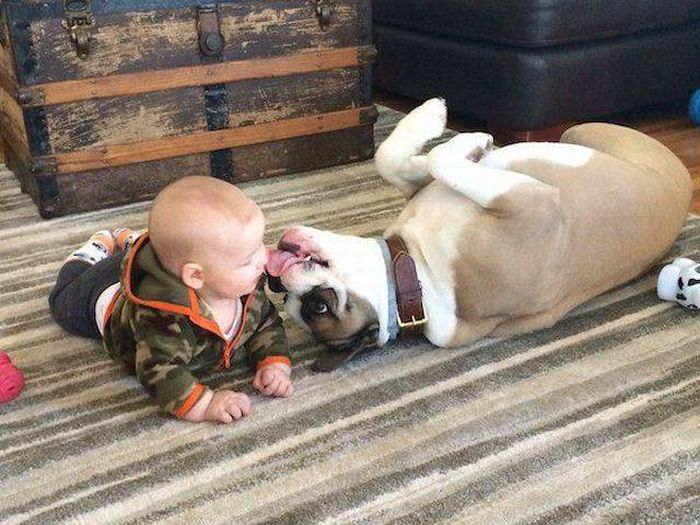 Cute dogs - part 120, funny dog photos, best cute dog picture, dog and puppy pictures