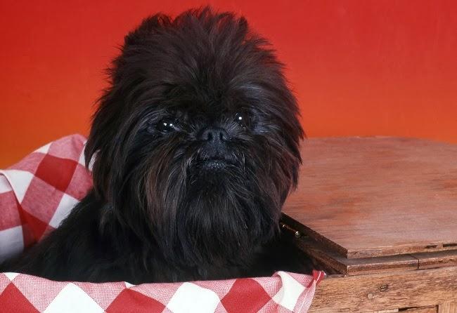 Czarny pies ma w życiu trudniej